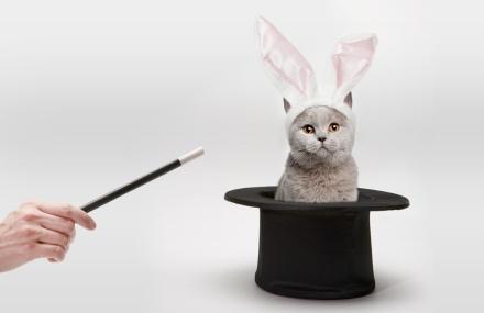 gato-por-liebre
